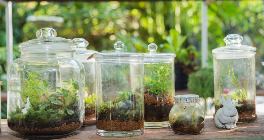 Glass Terrariums sitting on a counter